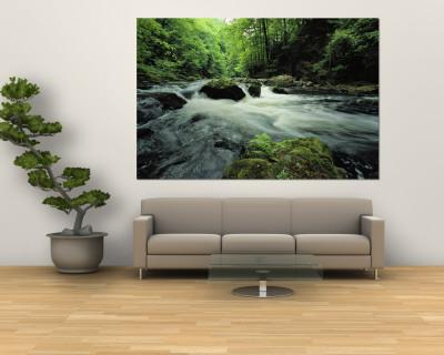 Woodland Stream and Rapids, Time Exposure