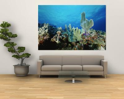 Underwater View of a Reef in the British Virgin Islands