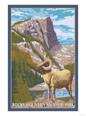 Big Horn Sheep, Rocky Mountain National Park