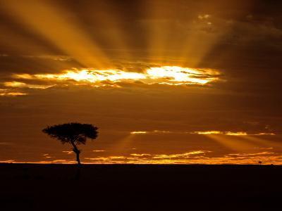 Sunrise, Maasai Mara, Kenya