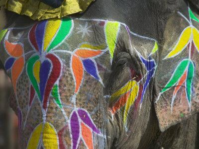 Elephant Decorated with Colorful Painting, Jaipur, Rajasthan, India