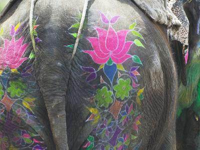 Elephant Decorated with Colorful Painting at Elephant Festival, Jaipur, Rajasthan, India
