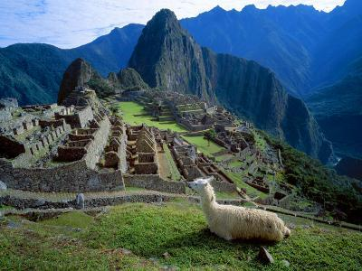 Llama Rests Overlooking Ruins of Machu Picchu in the Andes Mountains, Peru