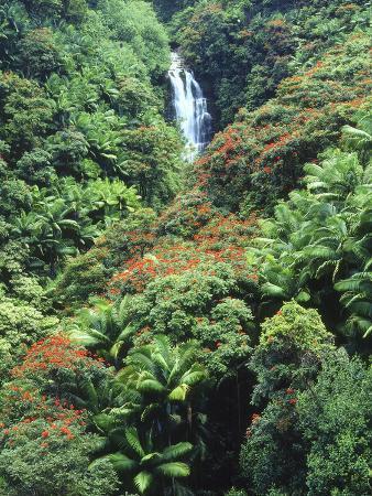 Waterfall in a Tropical Rain Forest, Hawaii, USA