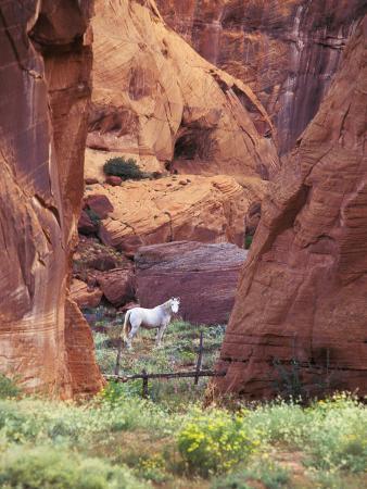 Red Rock, White Horse, White Mountains, Canyon De Chelly, Arizona, USA