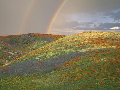 Hills with Poppies and Lupine with Double Rainbow Near Gorman, California, USA