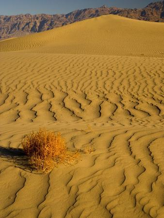 Sand Dunes in Morning Light, Mesquite Flats, Death Valley National Park, California, USA