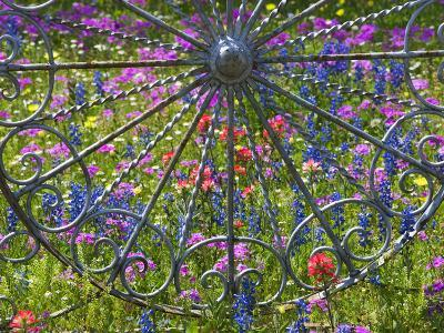 Wheel Gate and Fence with Blue Bonnets, Indian Paint Brush and Phlox, Near Devine, Texas, USA