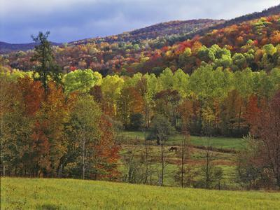 Autumn Tree Colors and Lone Horse in the Green Mountains, Vermont, USA