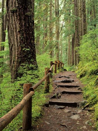 Rainforest with Trail, Sol Duc Valley, Olympic National Park, Washington, USA