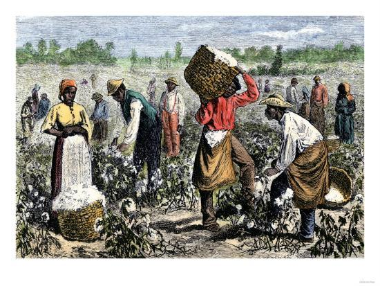 Image result for slaves picking cotton