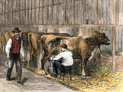 Milking-Time in a Dairy Barn, c.1870