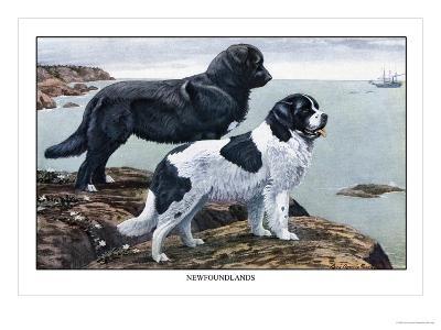 Two Newfoundlands