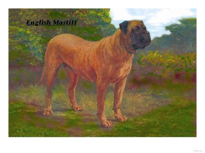 English Mastiff Champion