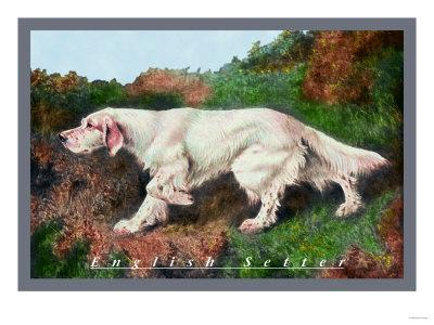 Typical English Setter