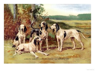 Gascon-Saintongeois Hounds of the Virelade Type
