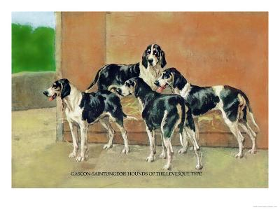 Gascon-Saintongeois Hounds of the Levesque Type