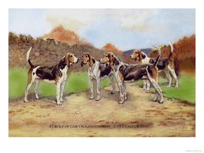 Group of Gascon-Saintongeois Foxhound Crosses