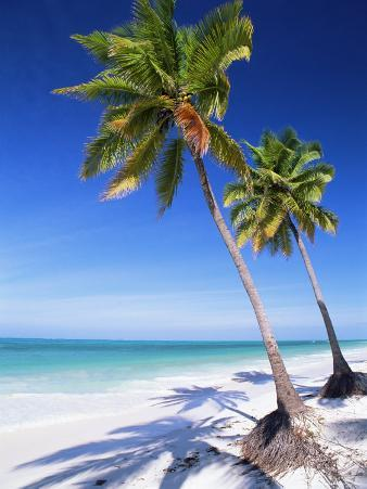 Palm Tree, White Sand Beach and Indian Ocean, Jambiani, Island of Zanzibar, Tanzania, East Africa