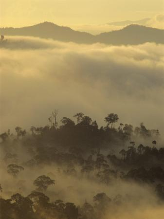 Dawn Light Silhouettes the Trees of the Rainforest, Danum Valley, Sabah, Island of Borneo, Malaysia