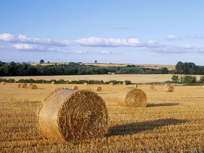 Agricultural Landscape with Straw Bales in a Cut Wheat Field