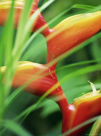 Close-up of Exotic Plant, Dominica, Caribbean, West Indies, Central America
