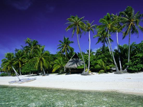 Beach And Palm Trees, Tahiti, Society Islands, French