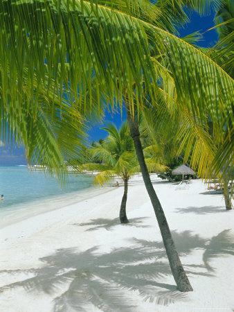 Beach, Bora Bora (Borabora), Society Islands, French Polynesia, South Pacific Islands, Pacific