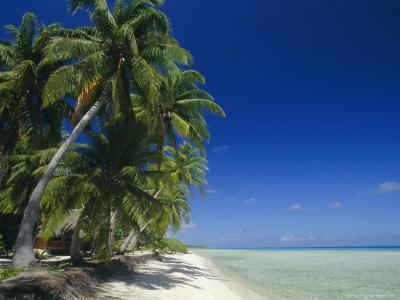 Beach, Rangiroa Atoll, Tuamotu Archipelago, French Polynesia, South Pacific Islands, Pacific