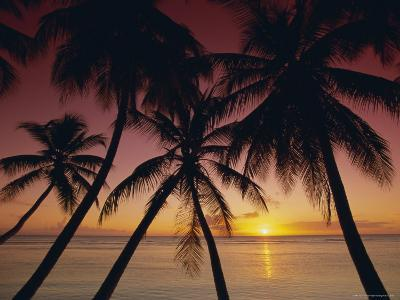 Palm Tree Silhouettes at Pigeon Point, Tobago, Trinidad and Tobago, West Indies, Caribbean