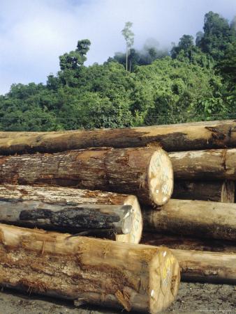 Logging in the Rain Forest, Island of Borneo, Malaysia