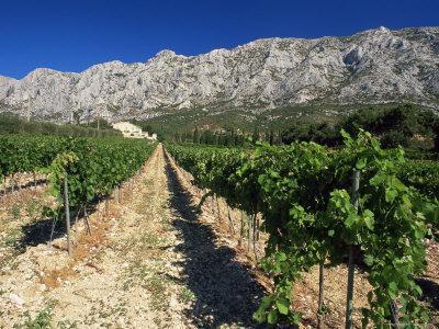 Vinyard at the Foot of Motagne Ste-Victorie Near Aix-En-Provence, Bouches-De-Rhone, France
