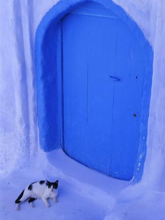 Blue Door and Cat, Chefchaouen (Chaouen) (Chechaouen), Rif Region, Morocco, North Africa, Africa