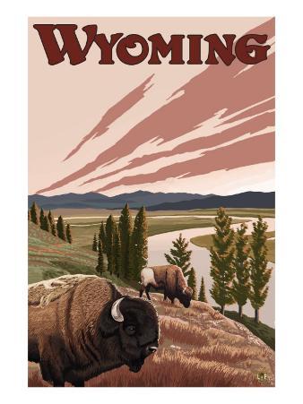 Yellowstone River Bison, Yellowstone National Park, Wyoming