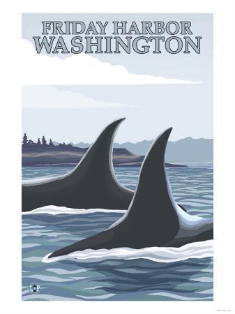 Orca Whales No.1, Friday Harbor, Washington