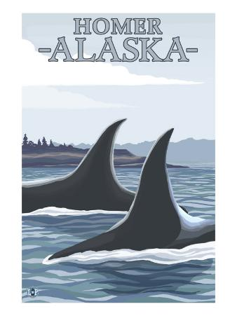 Orca Whales No.1, Homer, Alaska