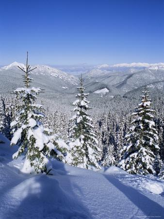 Snow Covered Pines in the Demanovska Valley, Low Tatra Mountains, Slovakia, Europe