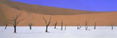 Panoramic View of Dead Trees and Orange Sand Dunes, Dead Vlei, Namib Desert, Namibia, Africa