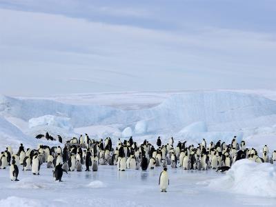 Emperor Penguin Colony, Snow Hill Island, Weddell Sea, Antarctica, Polar Regions
