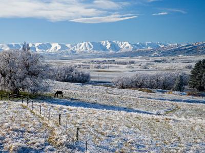 Hoar Frost and Farmland near Poolburn, Central Otago, South Island, New Zealand