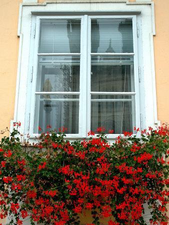Flowers in Window Box, Lower Town, Zagreb, Croatia