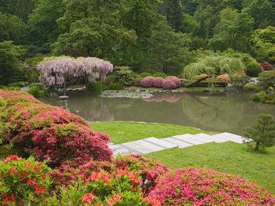 Flowers in Bloom, Japanese Garden, Washington Park Arboretum, Seattle, Washington, USA