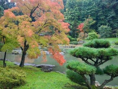 Autumn Color at the Japanese Garden, Washington Park Arboretum, Seattle, Washington, USA