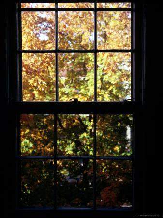 Autumn View Out of a Wooden Pane Window, Washington, D.C.