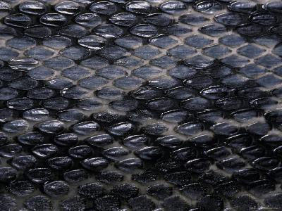 Close-Up View of the Scales of a Taiwan Beauty Snake, Melbourne Zoo, Australia