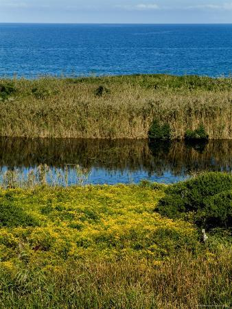 Coastal Marshland on Block Island Sound, Rhode Island