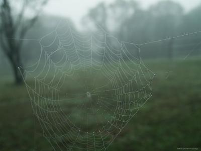 Close-Up of a Spider Web in the Fog, Block Island, Rhode Island