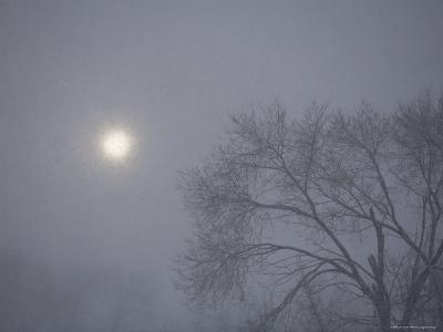 Bare Tree in a Snowstorm