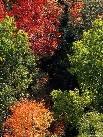 Deciduous Trees in their Autumn Glory