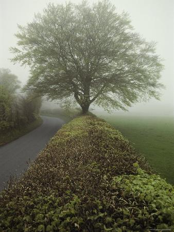 Hedge-Lined Country Road in Somerset, England